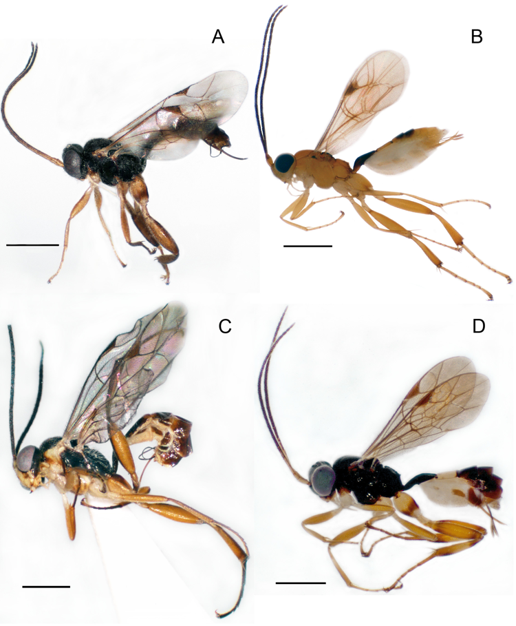 The Genera of Ichneumonidae